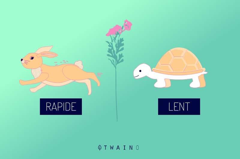 Lievre vs tortue