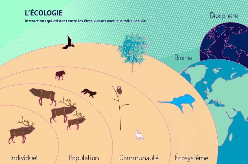 L ecologie