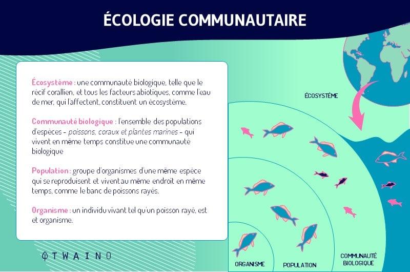 L Ecologie communautaire