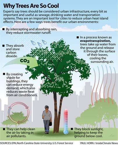 Comment est ce que les arbres peuvent aider la planète