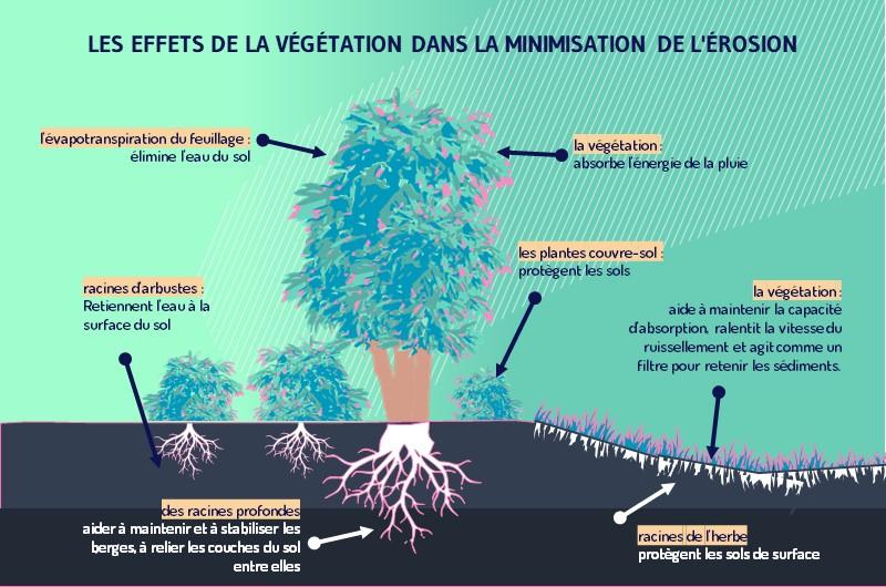 La plantation et la conservation des arbres