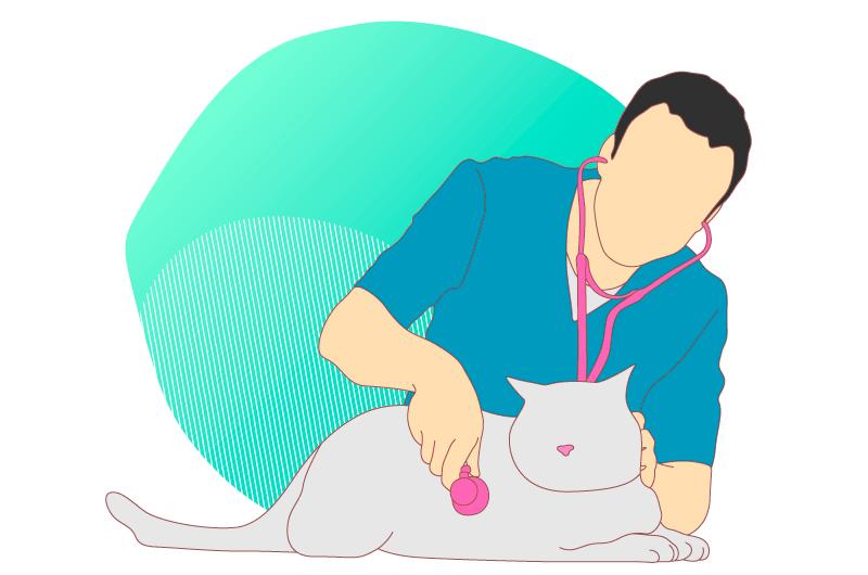 SEO vétérinaire